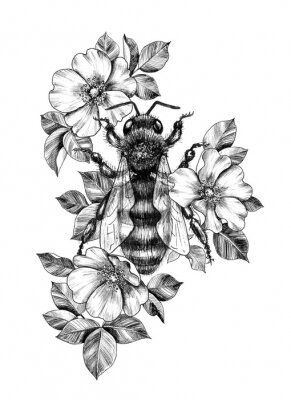 Posters Hand Drawn Monochrome Bee among  Dog Rose Flowers