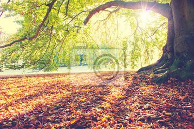 Posters Hêtre à l'automne