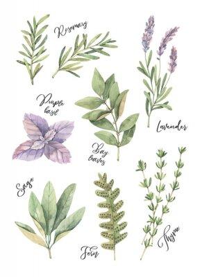 Posters Illustration aquarelle Affiche avec des feuilles vertes botaniques, des herbes et des branches. Éléments de design floral. Parfait pour les invitations de mariage, cartes de souhaits, blogs, gravures,
