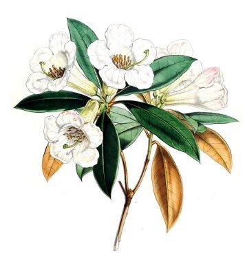 Posters Illustration de fleur