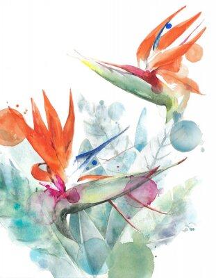 Posters Illustration de peinture aquarelle strelitzia fleurs tropicales oiseau de paradis isolé sur fond blanc