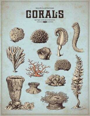 Posters illustrations mer-vie: les coraux, les éponges et les anémones de mer (1)