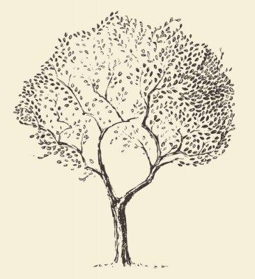 Posters Jeune, olive, arbre, Illustration, vecteur, main, dessiné