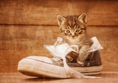 Posters Kitten assis dans une chaussure, image vintage