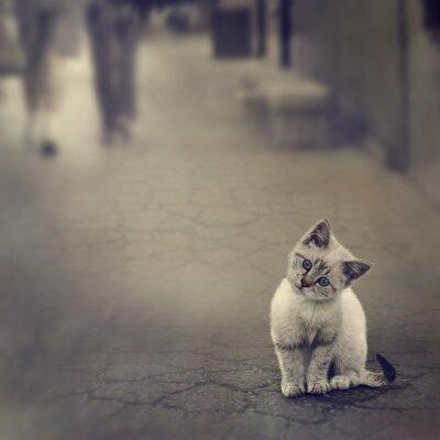 Posters Kitten On The Street