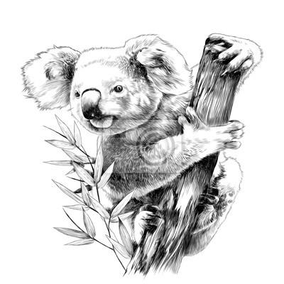 Koala Assis Sur Un Hic Deucalyptus Mange Croquis Dessin Vectoriel