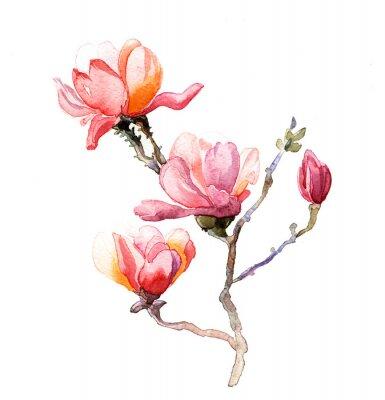 Posters L'aquarelle Magnolia isolé sur le fond blanc