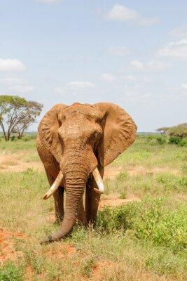 Posters l'éléphant