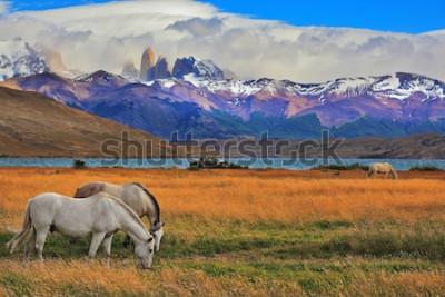 Posters Lac Laguna Azul dans les montagnes. Au bord du lac paissant des chevaux. Paysage impressionnant dans le parc national Torres del Paine, Chili