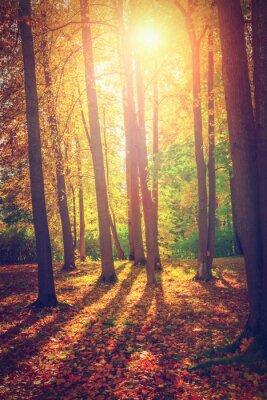 Posters Le paysage d'automne
