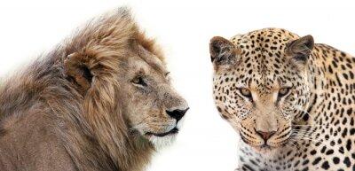 Posters Leone e Leopardo insieme