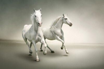 Posters Les chevaux blancs