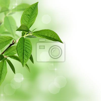 Les feuilles vertes frontière avec copie espace