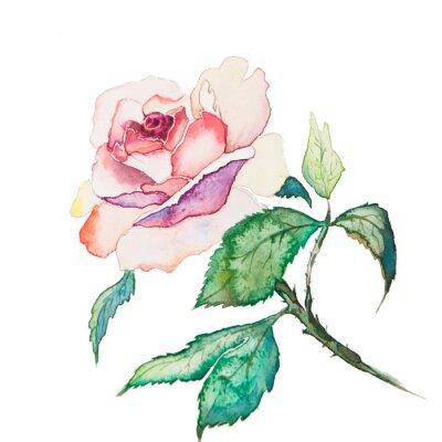 Posters les fleurs de printemps aquarelles isolés sur le fond blanc
