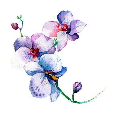 Posters Les nouveau vue de orchidée aquarelle main dessiné pour carte postale isolé sur le fond blanc