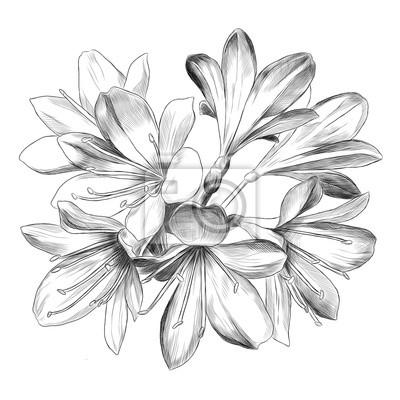 Posters Lily Bouquet 7 Fleurs Croquis Graphiques Vectoriels Dessin Noir