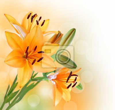 Lily frontière fleurs