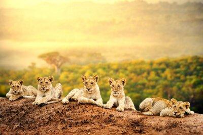 Posters Lionceaux attente ensemble.