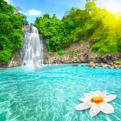 Posters Lotus flower in waterfall pool