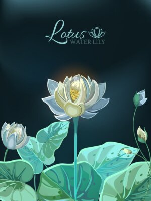 Posters Lotus flower with green leaves close-up in hand drawn style