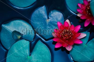 Posters lotus rouge nénuphar qui fleurit sur la surface de l'eau et des feuilles bleu foncé toniques, fond de la nature pure, plante aquatique, symbole du bouddhisme.