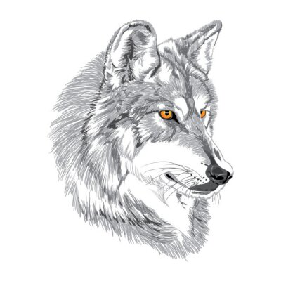 Posters Loup museau croquis