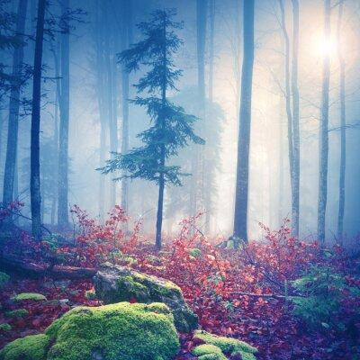 Posters Lumière magique dans la forêt brumeuse avec le soleil