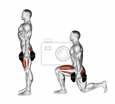 Posters Lunges avec haltères. Exercice pour la musculation. Les muscles  cibles sont marqués en b55f869337f