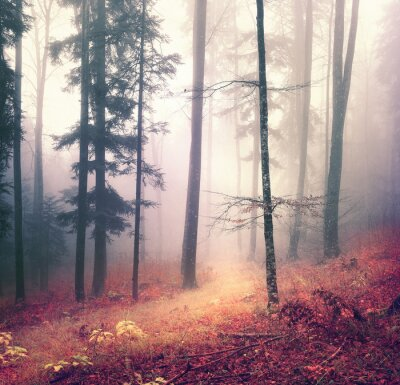 Posters Magie saison d'automne arbre de la forêt de la couleur de fond avec lumineux chemin rouge orange. Belle forêt saisonnière.