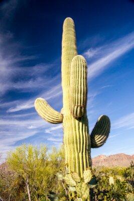 Posters Majestic Saguaro