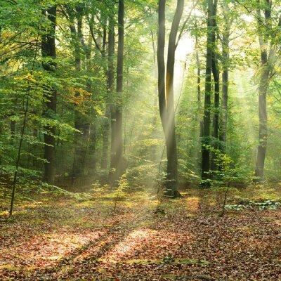 Posters Matin dans la forêt