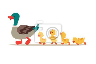 Posters Mère canard et canetons. Joli bébé canards marchant dans la rangée. Illustration de vecteur de dessin animé Canard mère animal et famille caneton