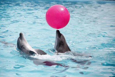 Posters Mignon, dauphins, pendant, discours, dolphinarium