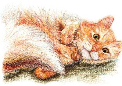 Posters Mignon joli gingembre chat moelleux art tiré par la main
