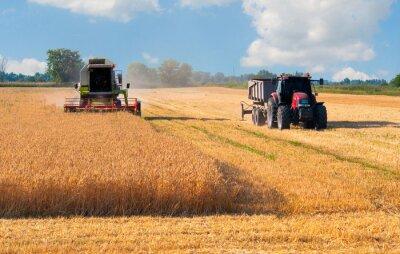 Posters Moissonneuse-batteuse et un tracteur la récolte de blé le jour ensoleillé d'été