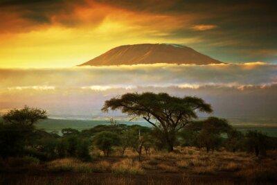 Posters Mont Kilimandjaro. Savanna à Amboseli, au Kenya