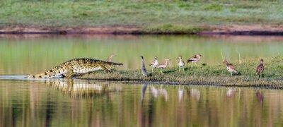 Posters Nil, crocodile, Kruger, national, Parc, sud, afrique