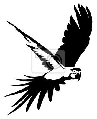 Posters Noir Blanc Linéaire Peinture Dessiner Perroquet Oiseau
