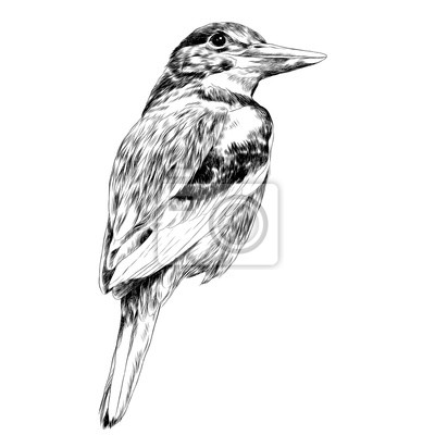 Posters Oiseau Alcyone Croquis Vecteur Graphique Dessin Noir Et Blanc