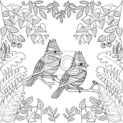 Posters Oiseaux Tropicaux Pour Livre De Coloriage Adulte Page Zentangle