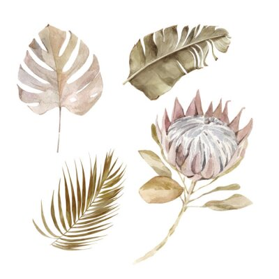 Posters Old dry swirling tropical leaves and flower watercolor vector illustration isolated on the white background. Closeup view palm leaf in boho style. Hand drawn leaves and protea in sepia color scheme.
