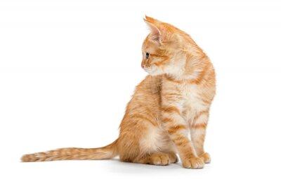 Posters Orange, rayé, kittenlittle