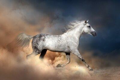 Posters Orlov cheval dans la poussière