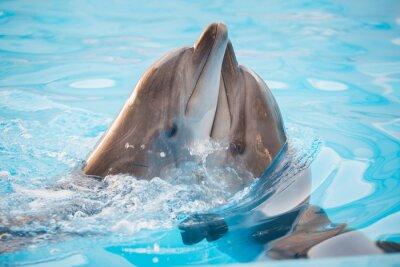 Posters paire de dauphins dansant dans l'eau