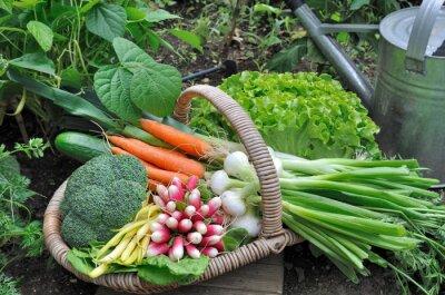 Posters panier de légumes frais Dans potager