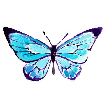 Posters papillon, conception de l'aquarelle