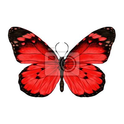 Papillon Ouvert Ailes Haut Vue Symetrique Dessin Graphiques