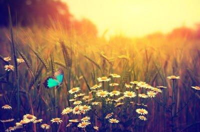 Posters Papillon printemps volant fleurs prairie marguerite