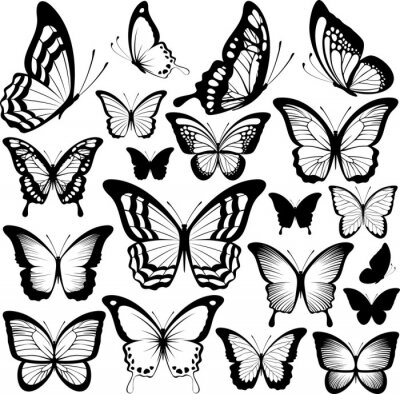 Posters papillons silhouettes noires