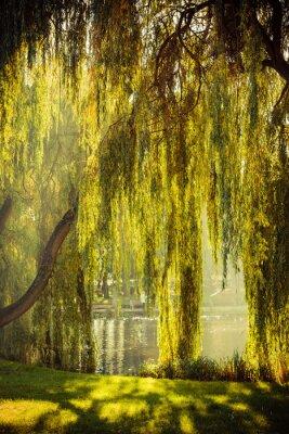 Posters Parc avec étang et saules